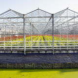 Greenhouse full of blossoming flowers in the netherlands Stock Photos