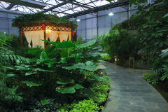 Greenhouse garden royalty free stock photography