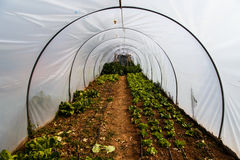 Greenhouse garden with vegetables Royalty Free Stock Photo