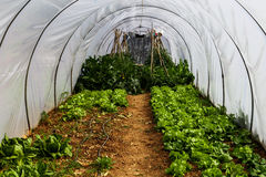 Greenhouse garden with vegetables Royalty Free Stock Images