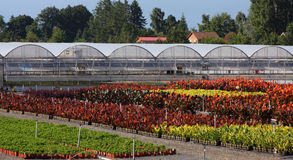 Greenhouse Gardens. Outside view of greenhouse buildings and gardens royalty free stock photo