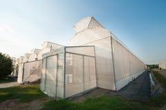 Greenhouse glass. At OTOP lemon field, Thailand Stock Photos