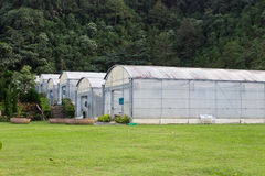 Greenhouse. For growing flower and plant Stock Photography