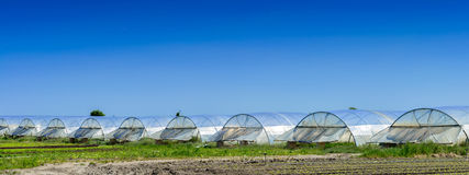 Greenhouse for growing fruit and vegetables Stock Images