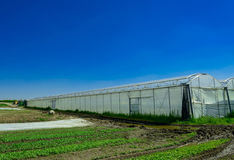Greenhouse for growing fruit and vegetables Royalty Free Stock Photo