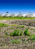 Greenhouse for growing fruit and vegetables Royalty Free Stock Image