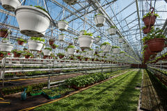 Greenhouse for growing vegetables under favorable conditions stock photography