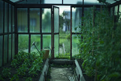 Greenhouse with the harvest after rain. Summer stock photo
