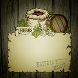 greenhouse herbs natural Стоковые Изображения RF
