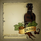 greenhouse herbs natural Стоковая Фотография