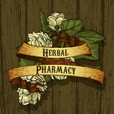 greenhouse herbs natural Стоковое Изображение RF