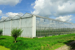 Greenhouse. In Holland Royalty Free Stock Images