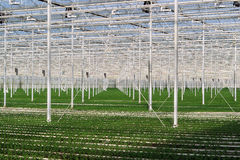 Greenhouse-indoors Stock Images