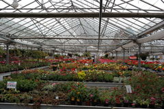 Greenhouse industrial Royalty Free Stock Images