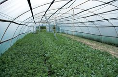 Greenhouse inside Royalty Free Stock Photos