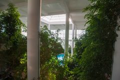Greenhouse inside the building, with a pool inside among the vegetation stock photos