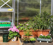 Greenhouse inside with plants Stock Image