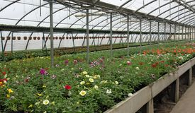 Greenhouse for the cultivation of flowering plants and Royalty Free Stock Photo