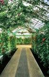 Greenhouse interior Royalty Free Stock Photo