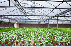 Greenhouse interior Royalty Free Stock Photo
