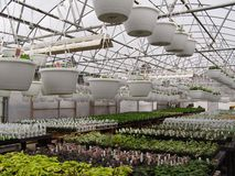 Greenhouse Interior. Garden center getting ready for spring Stock Images