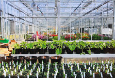 Greenhouse Interior Stock Image