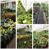 Greenhouse interior collage Stock Photography