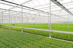Greenhouse interior Royalty Free Stock Photography
