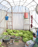Greenhouse interior Royalty Free Stock Images