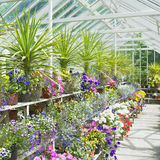 Greenhouse, Ireland Royalty Free Stock Photography