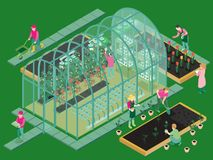 Greenhouse Isometric Composition. Greenhouse production isometric composition with glasshouse facility workers planting seedlings growing flowers vegetables stock illustration