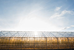 Greenhouse with lamps inside Royalty Free Stock Images