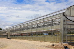 Greenhouse. A large greenhouse used to grow different annuals and perennials Stock Photography