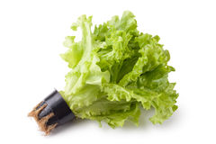 Greenhouse lettuce in a pot Stock Photo