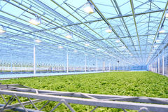 Greenhouse Royalty Free Stock Photo