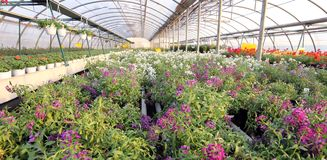 Greenhouse with a lot of flowers and plants for sale in the spri Stock Photos