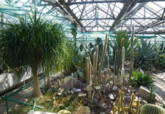 Greenhouse with many kinds of cactus, aloe, and other trees. Stock Images
