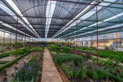 Greenhouse with many plants stock image