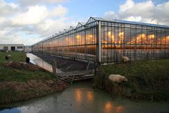 Greenhouse in Moerkapelle with growing lights in orange colour which is creating light pollution. With this fake assimilation proces royalty free stock image