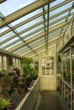 Greenhouse. National Botanic Gardens. Dublin. Ireland. Interior. Greenhouse at sunset. National Botanic Gardens. Dublin. Ireland royalty free stock photography