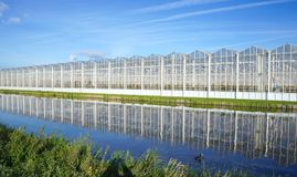 Greenhouse in the Netherlands. A greenhouse for growing plants near the villages of Delfgauw and Pijnacker in the Netherlands royalty free stock image