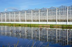 Greenhouse in the Netherlands. A greenhouse for growing plants near the villages of Delfgauw and Pijnacker in the Netherlands stock images