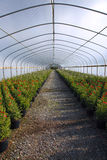 Greenhouse nursery. Royalty Free Stock Images