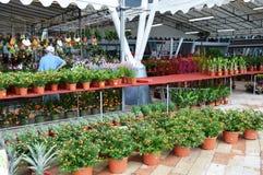 Greenhouse Nursery Royalty Free Stock Image