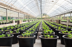 Greenhouse nursery. For young plant Stock Photo