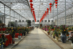 GreenHouse. One of Foshan Flower World Market supplier's greenhouse interior view, January  2013. In Chencun Town, Shunde District, Foshan city,Canton Province Stock Image