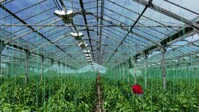 Greenhouse for organic growing vegetables stock footage