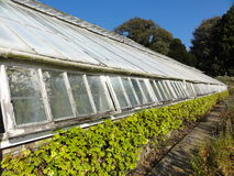 Greenhouse perspective Stock Photos