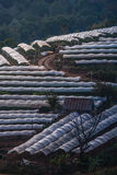 Greenhouse Plant at Doi Inthanon Royalty Free Stock Image