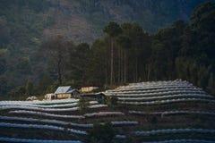Greenhouse Plant at Doi Inthanon Royalty Free Stock Photo